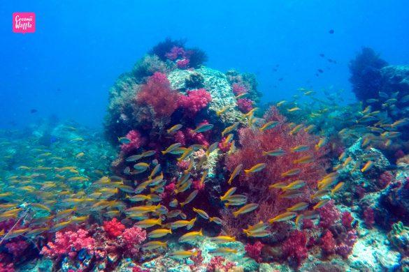 จุดปะการังน้ำตื้น