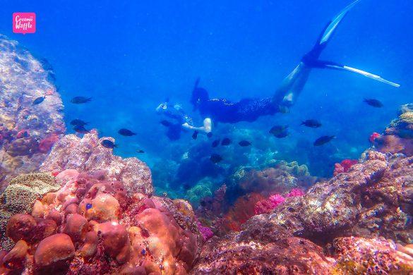 ชมปะการังน้ำตื้น Bruer