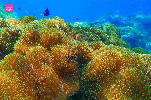 ปะการังน้ำตื้น