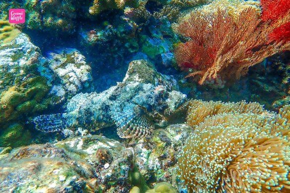 ปะการังน้ำตื้น Bruer Island
