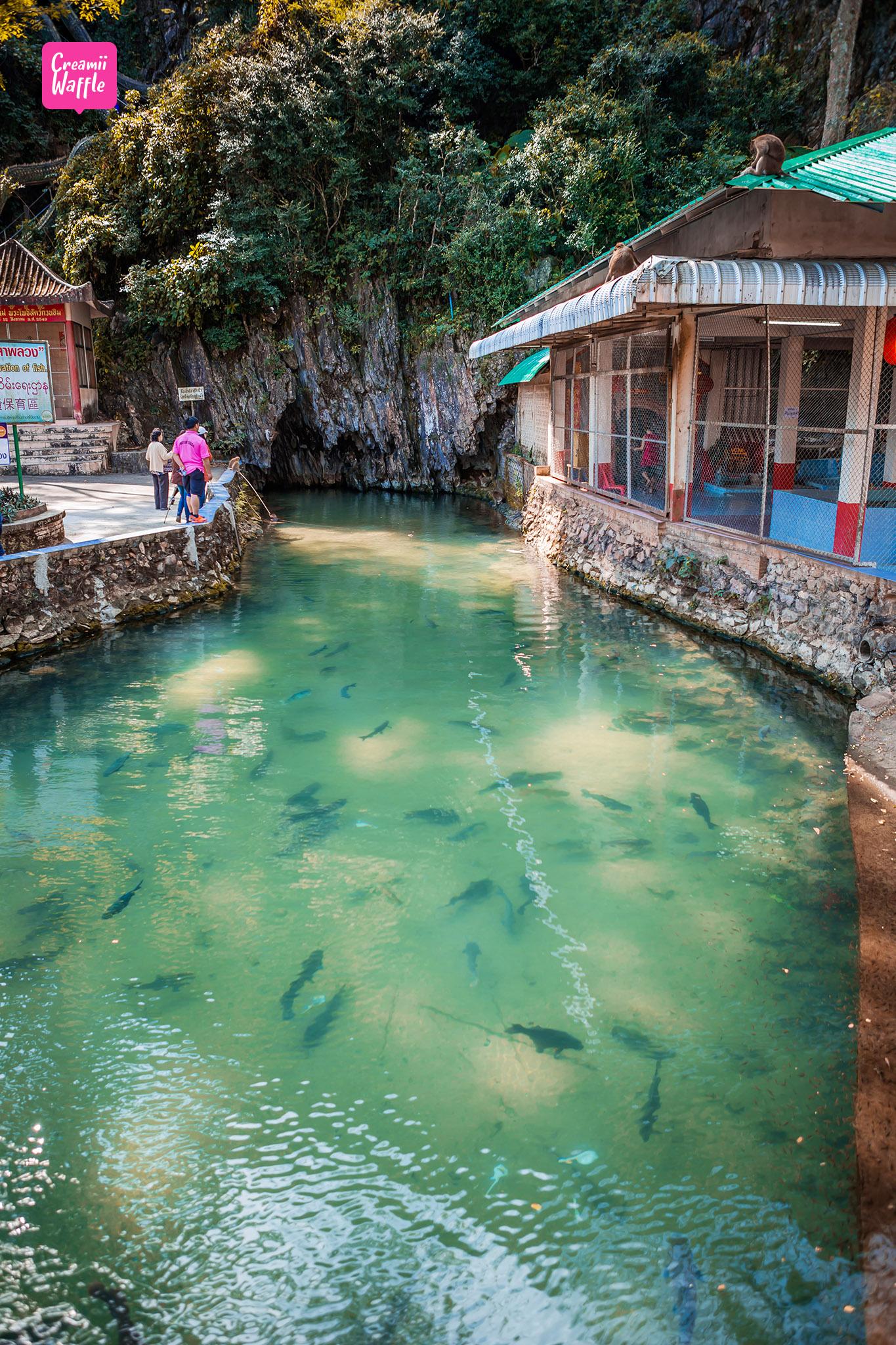 ปลาพลวงหินเกล็ดน้ำเงิน