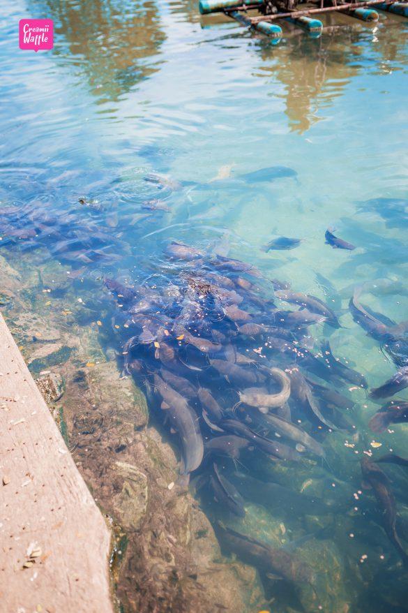 ปลา วัดถ้ำปลา