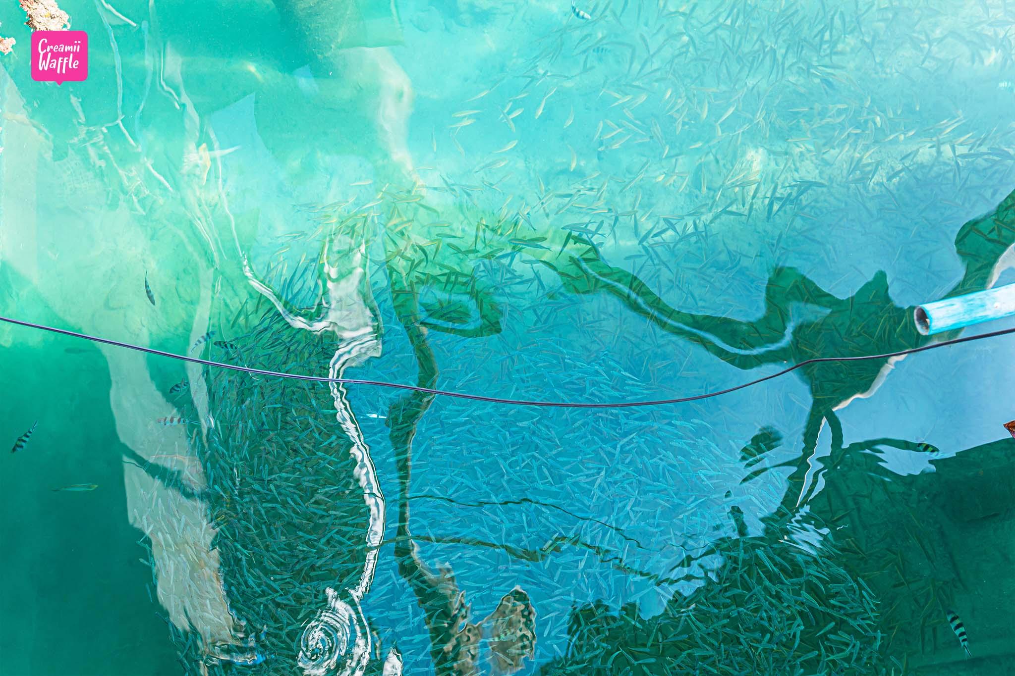 KOH TAO คู่มือท่องเที่ยวเกาะเต่า ใสมาก