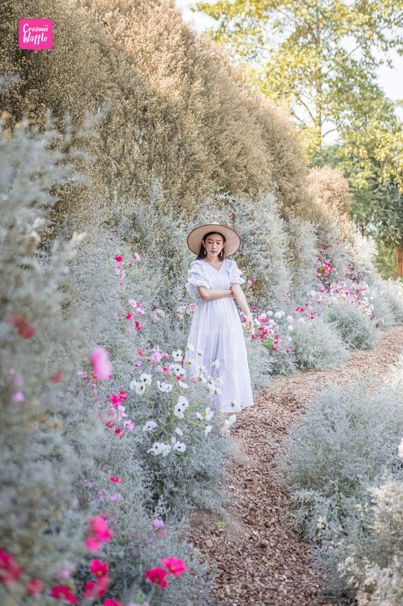 งานดอกไม้ มหัศจรรย์แดนมาลี รีวิว